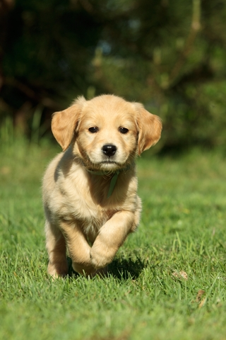 how to become a professional dog trainer uk